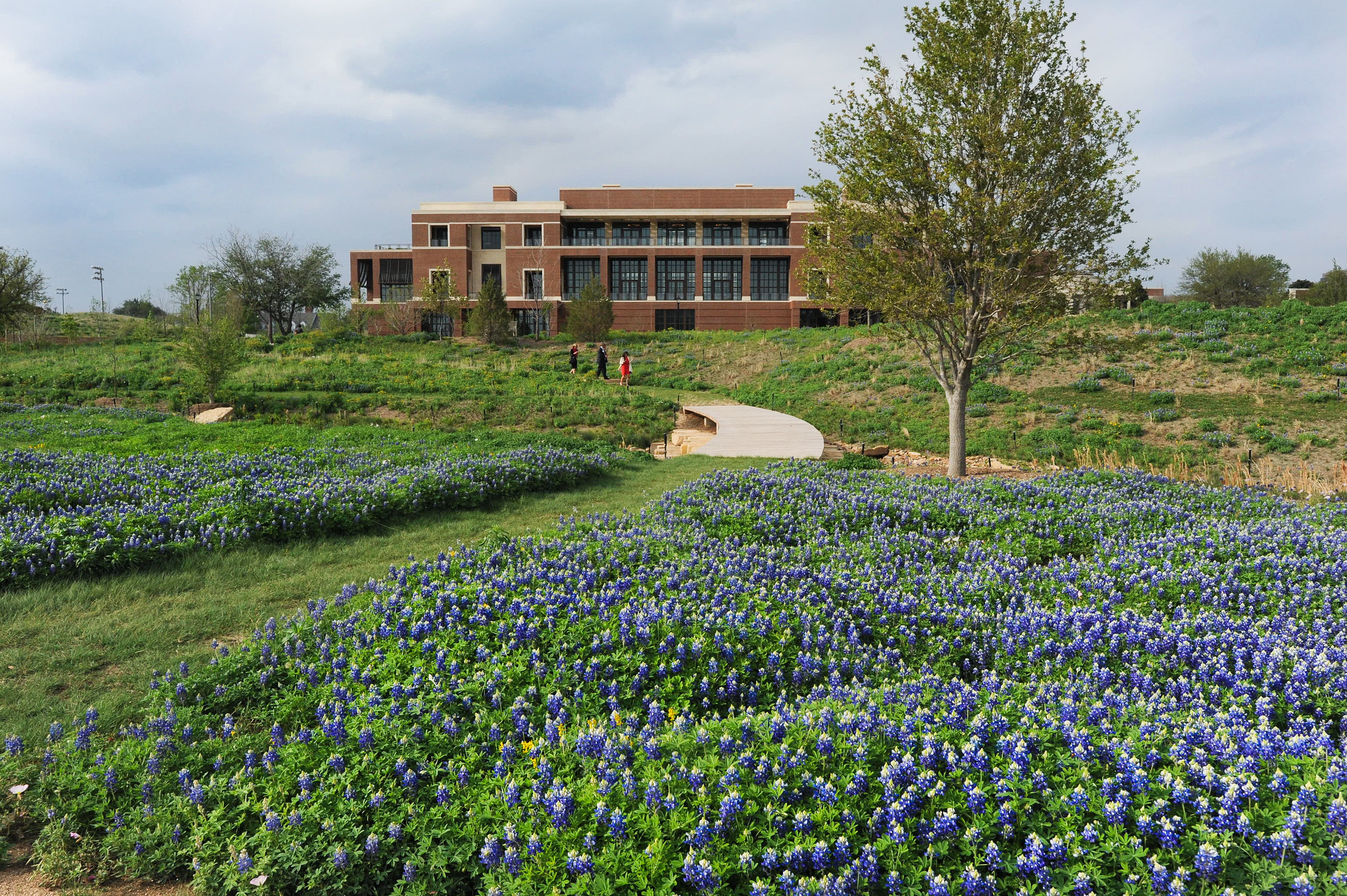 The Native Texas Park at the Bush Center. Photo Courtesy of Grant Miller for the George W. Bush Presidential Center.